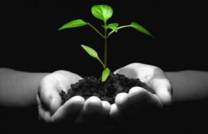 plant_hands_shutt